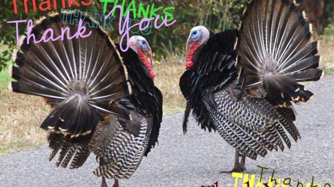 Thanksgiving And Volunteer Appreciation Party